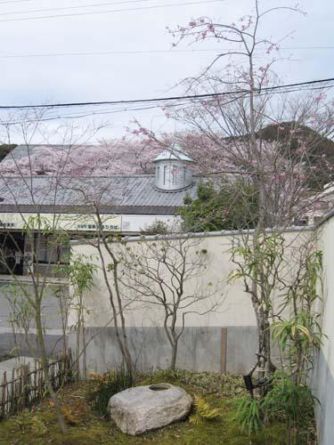 160405桜丹波本店 (5)●.jpg
